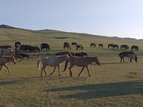 Pferde unterwegs_2